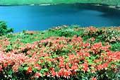 野反湖の春